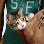 猫との旅行!一泊の場合の持ち物や車移動での注意点とは!?