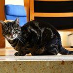 猫が引っ越ししてから鳴く!原因はストレスを感じているから?