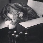 猫 引っ越し10