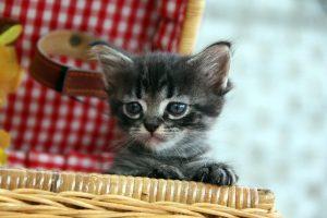 猫 リュック1