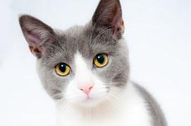 猫 ひげ1