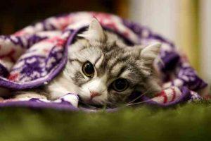 猫 避妊手術 費用3