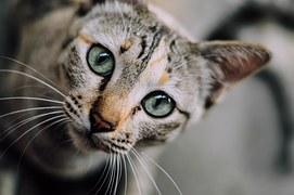 猫 術後のケア 3