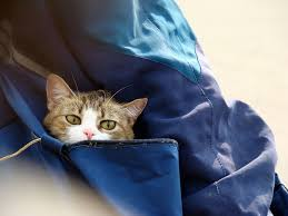 猫 旅行21