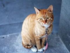 猫 旅行9