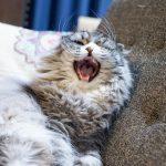 猫が何度も吐く時に考えられる原因は?すぐできる対処法も!