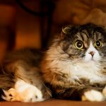 猫のリンパ腫!食欲廃絶の状態になると余命はどれくらい?