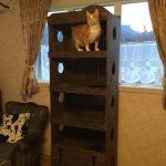 猫タワーを手作りしたい!100均でおしゃれな作り方とは?