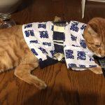 猫の洋服の作り方!愛情たっぷり手作り服のアイディア紹介!