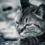 猫の突然死!嘔吐をして急死する事例で考えられる原因は?