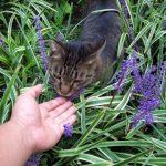 猫にレボリューションを使う時の副作用とは?効果はあるの?