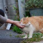 猫は耳カットされると痛い!?かわいそうでも切る意味とは?