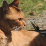 猫の顔にできものができた!病気が原因の可能性もあるの?