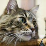 猫の目に白い濁りがある!これって病気?正しい対処法は?