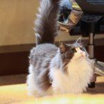 猫のしっぽが震える!どんな意味があるの?