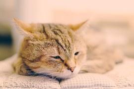 猫 術後のケア 4