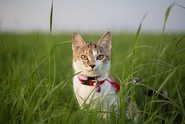猫 旅行13