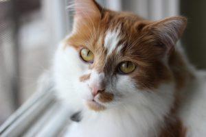 cat-1404517_1280