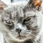 猫の背中がピクピクしている!危険な病気の可能性はある?