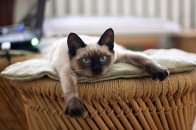 cat-882049_640