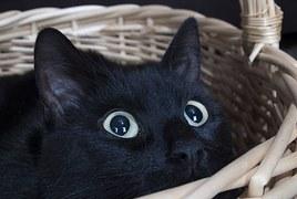 猫 引っ越し5
