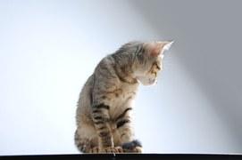 猫 術後のケア 8