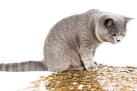 猫 避妊手術 費用13