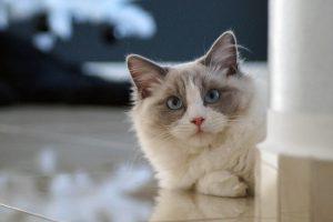 cat-1101064_1280