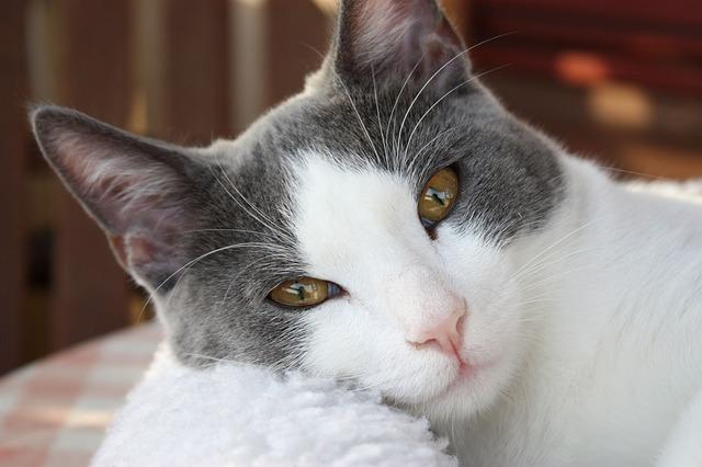 cat-1165587_640