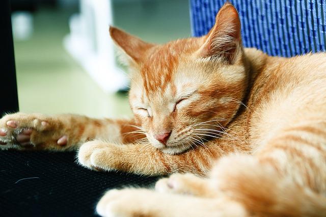 cat-1311002_640