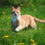猫がしっぽを振る5つの気持ちとは?【完全版】