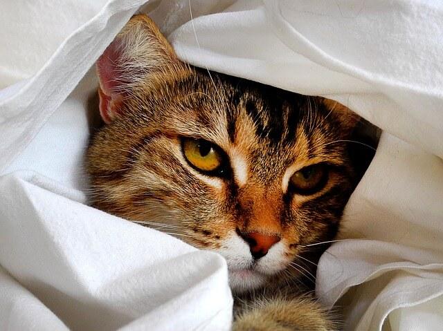 cat-1461372_640