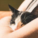 猫の腎不全!末期段階と診断された時の余命はどれくらい?