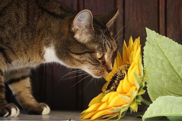 cat-1535572_640