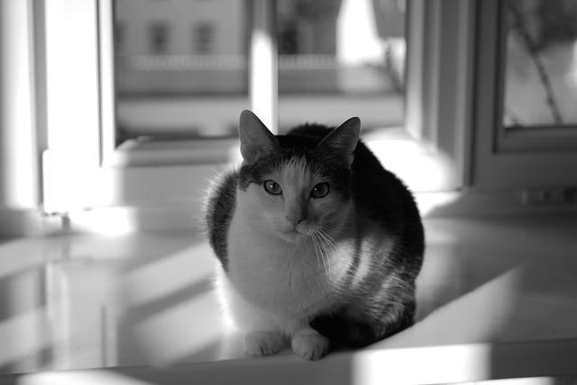 cat-1568769_640