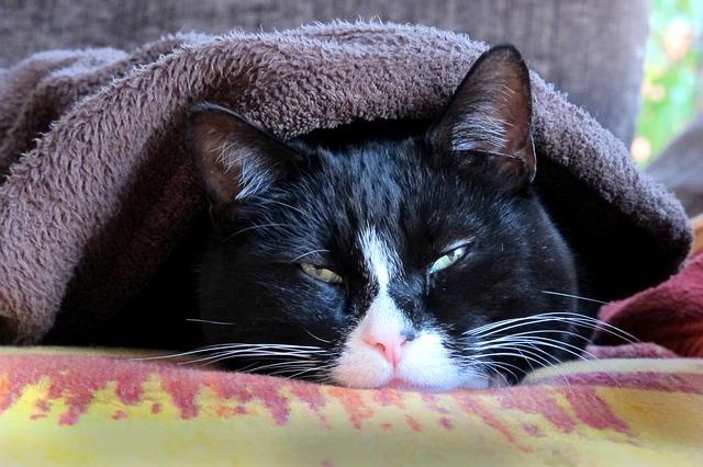 cat-1575231_640