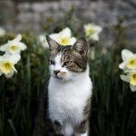 猫の白血病はどんな病気?初期と末期の具体的な違いとは?