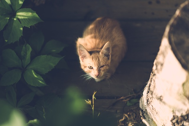 cat-1593061_640