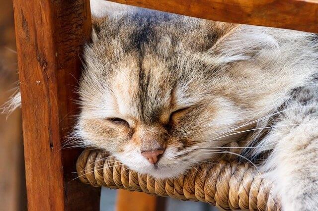 cat-1620296_640