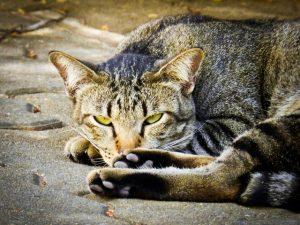 cat-175738_640