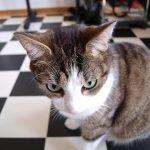 猫の脳腫瘍の症状!初期症状から末期までを進行順に解説!