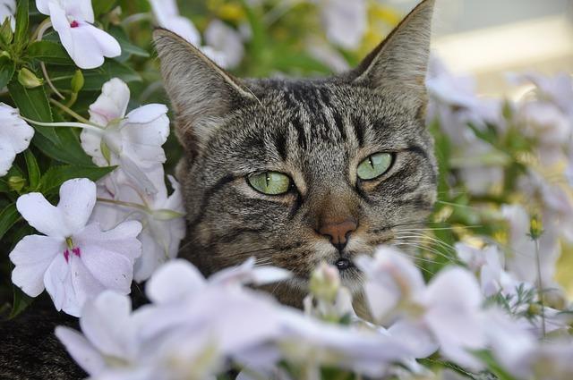 cat-566691_640