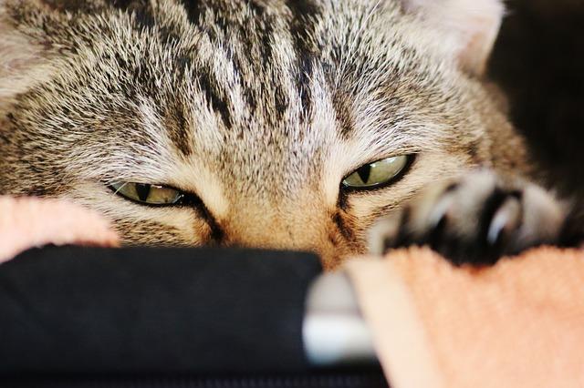 cat-574360_640