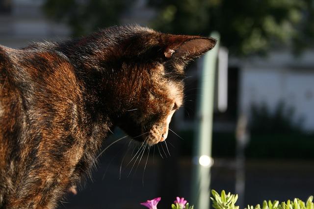 cat-661481_640