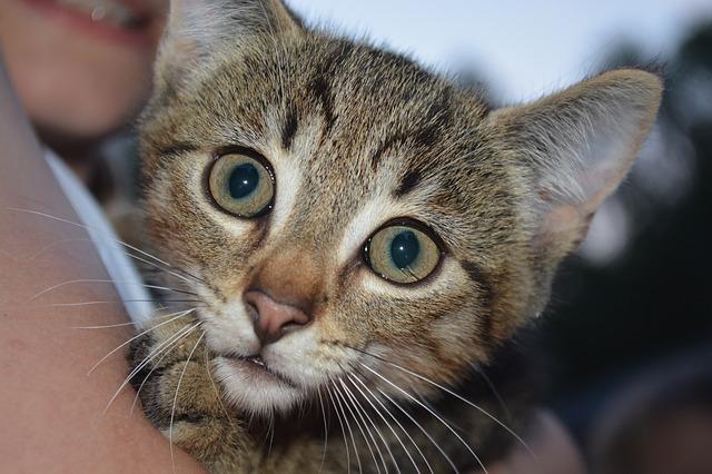 cat-833675_640