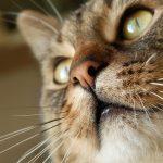 猫が口をくちゃくちゃさせている原因は?病院には行くべき?