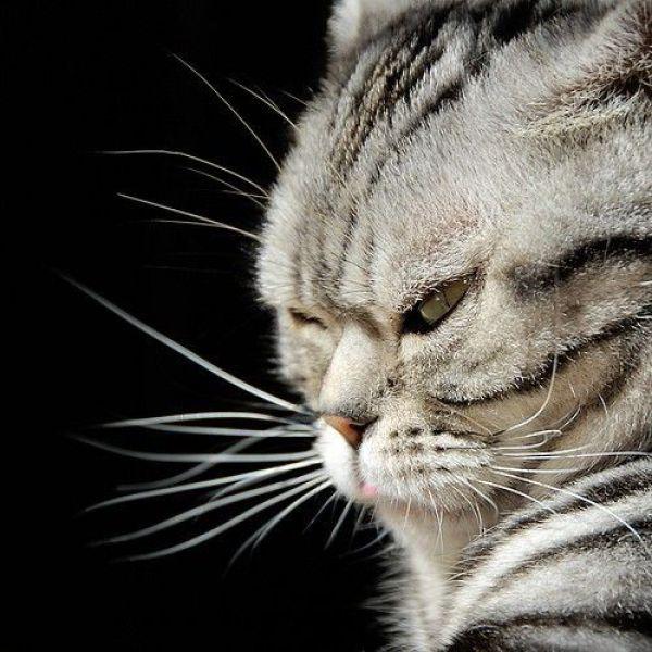 cat00181