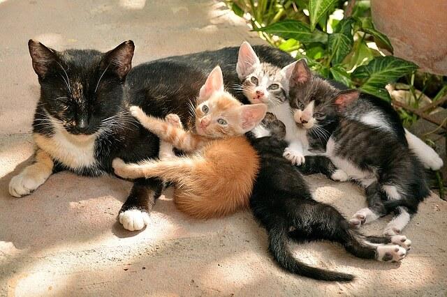 cats-1469477_640
