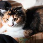 猫の薬の飲ませ方!粉薬の場合のコツはどうすればいい!?