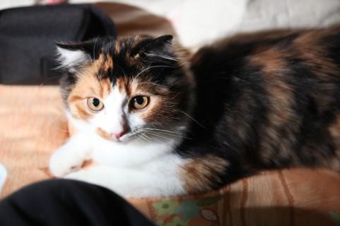 【獣医師監修】末期の猫のリンパ腫 症状や余命、飼い主として出来ること